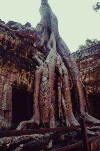 angkor_photo-84